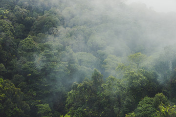 Tropical rainforest with mountain and mist in the morning at Doi Inthanon National park, Thailand.