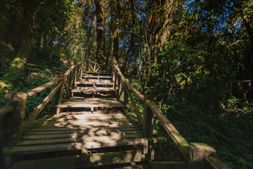 Wooden footpath in the forest in Doi Inthanon national park, Thailand.