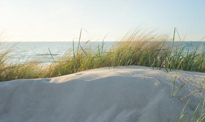Dünengras an der Ostsee