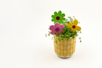 Spring floral decoration stock images. Cress in a yellow pot. Spring decoration on a white background