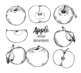 Hand drawn vector Illustrations - organic apples in sketch style. Perfect for packing, labels, prints, posters etc