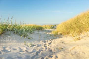 Dünenlandschaft an der Ostsee
