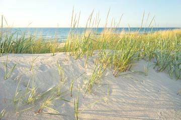 Fototapete - Dünenlandschaft an der Ostsee