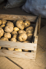 Harvested potatoes in wooden crate. Selective focus.