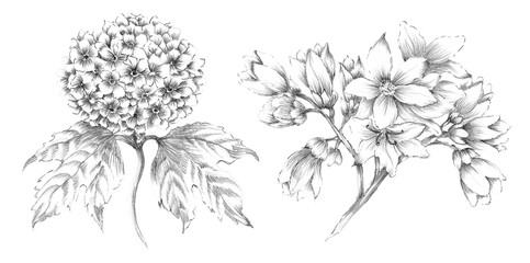 Handsketched Plant and Flower Illustrations - Pencil Graphite Sketches of Flowers and Plants