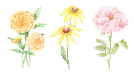 Watercolor Flower Illustrations - Hand Painted Illustrations of Flowers and Plants