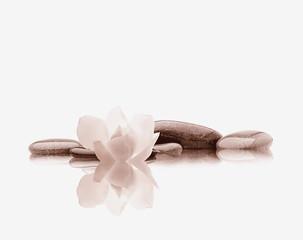 spa de piedras sobra agua con una flor blanca reflejada efecto vintage