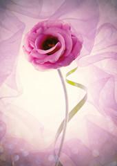 rosa envuelta en una tela