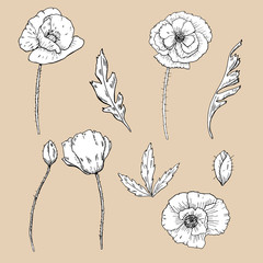 drawing flowers. poppy flower clip-art