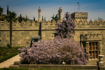 Climber Plant in Pink Blossom against Palace in Crimea