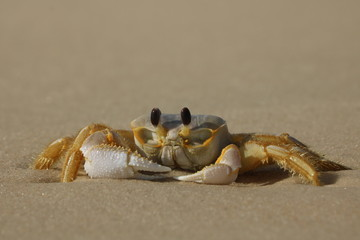 Closeup of crab at the beach