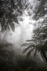 mglisty las w Australii - 195379835