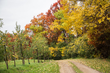 Apple Orchard Road in the Fall with Autumn Colors