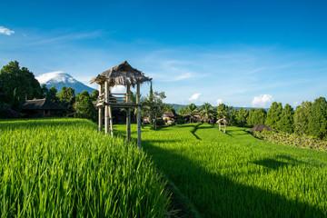 Rizière de Munduk - Bali