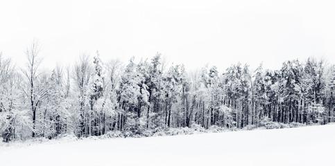 Snow-Covered Winter Tree Line.