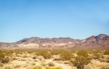 Green shrubs and a big mountain in the background in the Mojave desert on a march afternoon