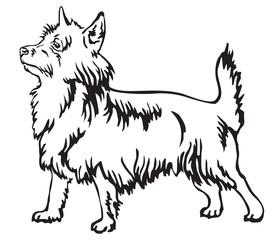 Decorative standing portrait of Australian Terrier vector illustration