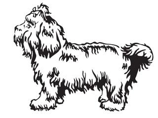 Decorative standing portrait of Bolonka vector illustration