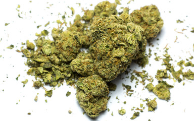 Space Queen marijuana sativa hybrid. A cross between Romulan and Cinderella 99, Space Queen presents a wide array of phenotypes, all of which possess great potency and some variation of a fruity aroma
