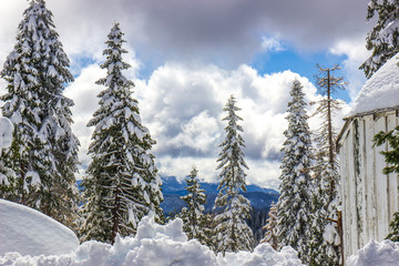 Snow Laden Trees With Mountains In Background