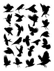 Birds silhouette. Good use for symbol, logo, web icon, mascot, sign, or any design you want.