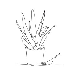 continuous line drawing Aloe vera in the pot