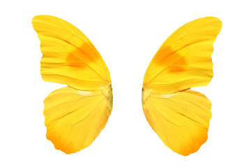 wings of a yellow butterfly isolated on white