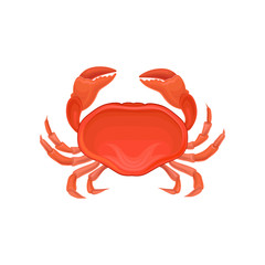 Detailed illustration of red crab. Marine creature with big claws. Sea animal. Decorative vector element for poster, restaurant menu or product packaging