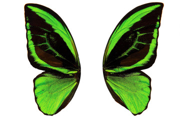 wings of a green butterfly isolated on white