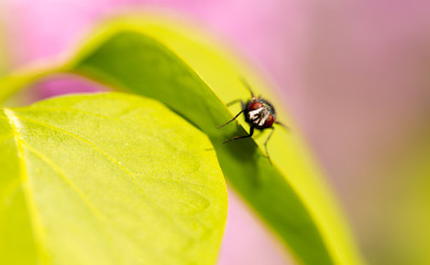 Portrait of a fly on a green leaf