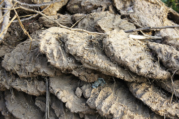 India, cow dung, potholes from cow dung are used to dry in the sun, is used to make fires
