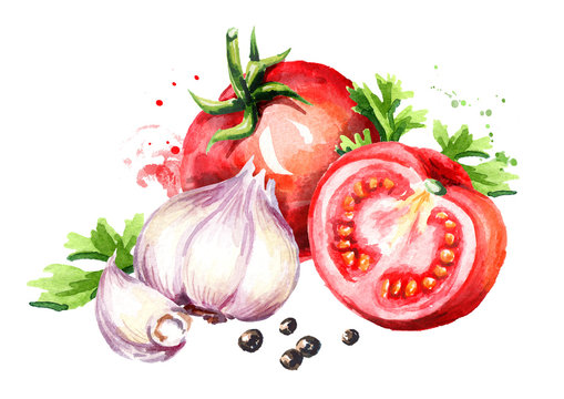 Rip red tomatoes with young garlic and peppercorns. Watercolor hand drawn illustration  isolated on white background
