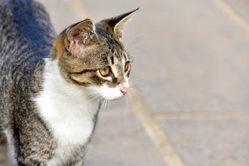 茶トラ野良猫 横顔