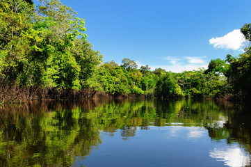The Amazonian juThe Amazonian jungle in South America explore on the boatngle