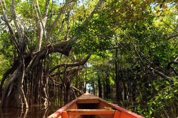 The Amazonian jungle in South America explore on the boat