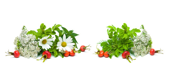 herbs and berries of wild rose isolated on white background