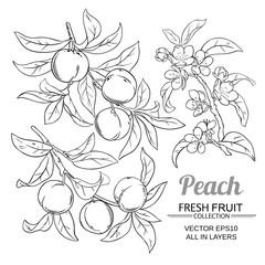 peach vector set