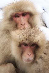 Japan/Chubu, Jigokudani Monkey Park