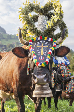 Cow with bell and flower decorations