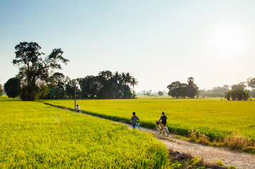 Rural dirt road tropical green rice field and bicycle tour in Koh Tepo, Uthaithani, Thailand