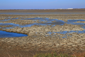Dried mud in a pond of Camargue, Provence in the south of France