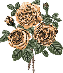 Golden roses vector art - Bouquet of golden  roses - vintage art