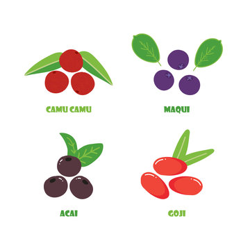 Set, collection of vector berry superfood. Camu camu, maqui, acai and goji berries isolated on white background.