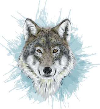 Realistic Vector Wolf - Stylized art