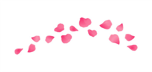 Pink flying petals isolated on White background. Sakura Roses petals. Vector