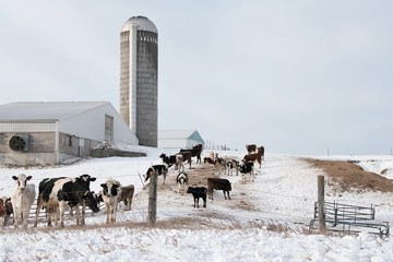 Dairy Farm in Winter