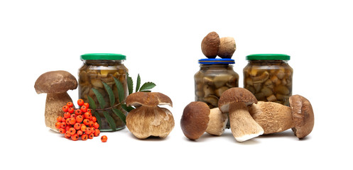mushrooms and a bunch of red rowan on a white background