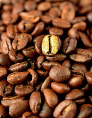 Golden roasted coffee bean among the others in a wooden bowl