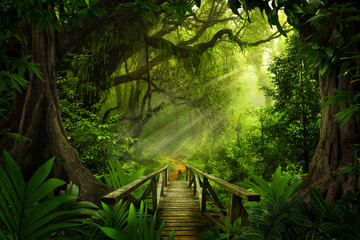 Deurstickers Jungle Asian tropical rainforest