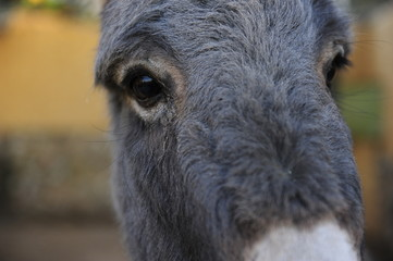burro simpatico
